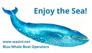 BlueWhaleBoatOperators Logo