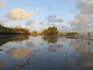 Amazing Wasini Island